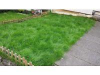 Maxwell lawn feed organic moss control