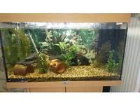 Fish Tank and Tropical fish