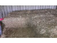 Wee square bales for sale