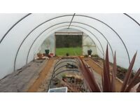 Polytunnel 45 x 18 ft £300, buyer to dismantle. Plastic less than 12 months old