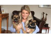 Experienced dog walker/ pet sitter