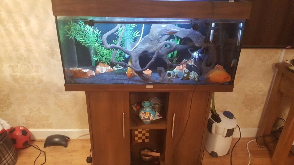 juwel rio 180 fish tank aquarium 2 months old perfect. Black Bedroom Furniture Sets. Home Design Ideas