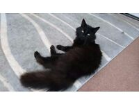 2 cats for rehoming