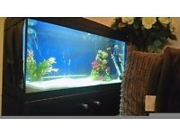 2 ft x 1 ft fish tank with stand