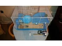 Female Russian dwarf hamster 🐹