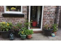 Week day Small Double/Single Room to rent in cosy home in Sharrow Vale