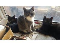 Kittens/ Cats Needing Loving Home