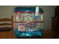 Hamster cage with 2 x hamsters