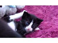 Last 2 Kittens