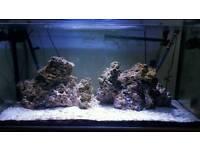 Fish tank - full marine set up