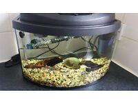 25 litre fish set up
