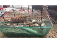 2 LOVELY 10 MONTH OLD MALE GERBILS NEED REHOMING!!! FREE (WITH ACCESSORIES)