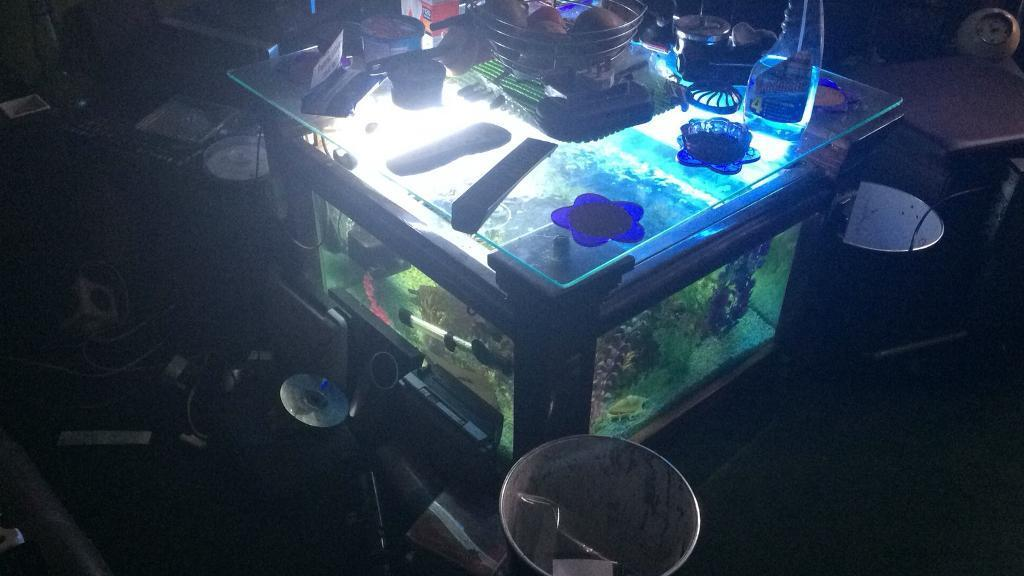 For Sale One Coffee Table Fish Tank In Balsall Heath West Midlands Gumtree
