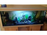 4 foot fish tank - with pump and led lights - slate and plants -