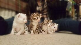 Gorgeous affectionate kittens