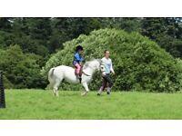 Lead Rein Pony 117cm LHC Grey 16yr old Welsh Sect A Gelding