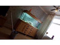 6ft aquaoak fish tank BARGAIN