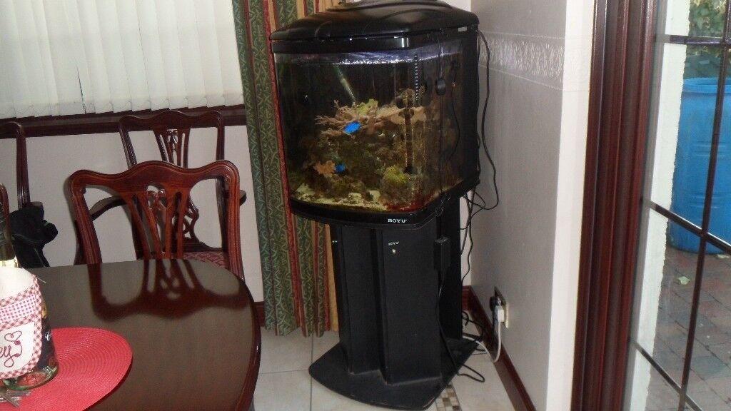 marine aquarium mature setup