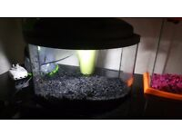 nice little fish tank with light gravel and filter ideal gold fish