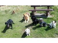 Home Dog Boarding (Licensed and Insured)