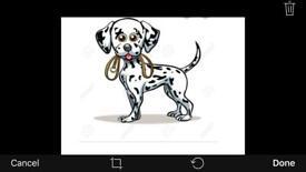 Waggie walks - dog walker service