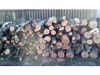 Firewood logs Ash
