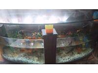 coffe table aquarium fish tank ,260l with tropical marine fish