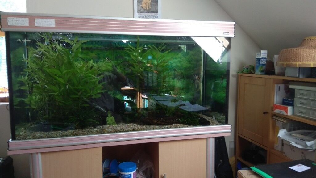 Fish tank 1 ads buy & sell used - find right price here