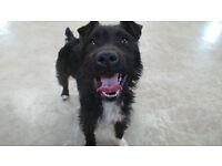 Active Terrier