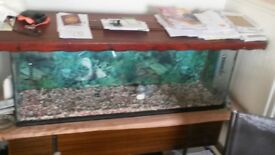 fish tank 4 foot by 16 inch with pump, lid, light and assorted ornaments