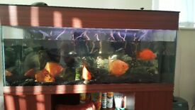 200 litre aquarium with all set up and fish for sale