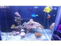 Marine fish corals live rock