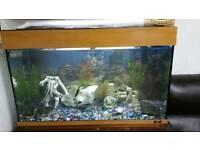 Juwel aquarium fish tank