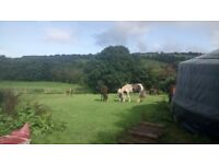 Land For Sale with stream, cabin and water. 4.3 acres Nr. Newquay, Cornwall