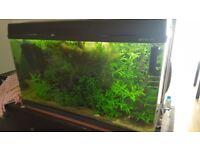 Fish tank 200 l