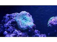 Marine Coral Live Rock