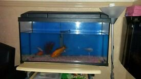 *FISH/FISH TANK FOR SALE*