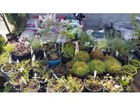 Mullaghmore House Garden Centre Omagh Clearance Sale