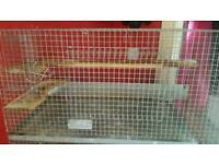 Large degus cage and 5 degus