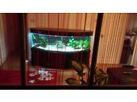 Fish tank realy big 600liters