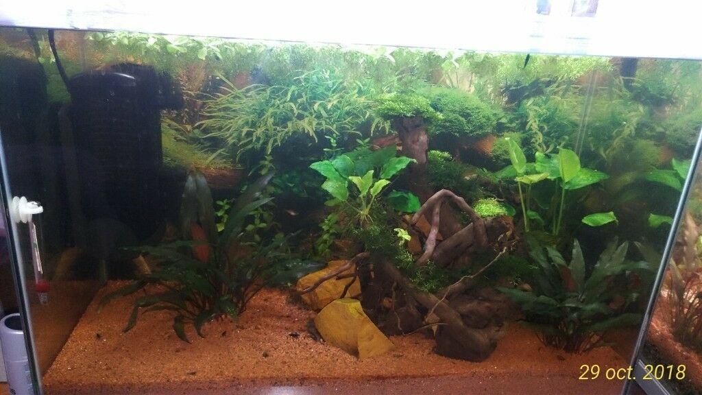 3c078de9a54 Tank Superfish Home 80