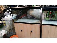 Fluval roma 200 litre aquarium £200