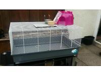 Indoor guinea pigs or rabbit cage