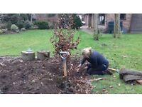 Big sky garden maintenance service