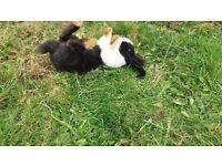 2 young rabbits