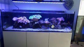marine fish tank break down