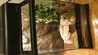 crocodile gecko with tank and all accessories 90$$