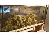 Full set aquarium