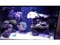 marine aquarium fish tank full setup aqua one reef 300l tmc