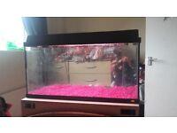 2foot fish tank